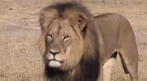 15-07-30 Leon Cecil